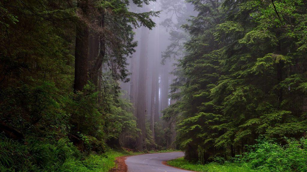 Forest Scotland